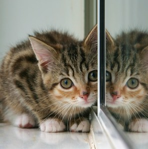Kittens reflection